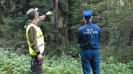 Комитет лесного хозяйства региона назвал главные причины пожаров