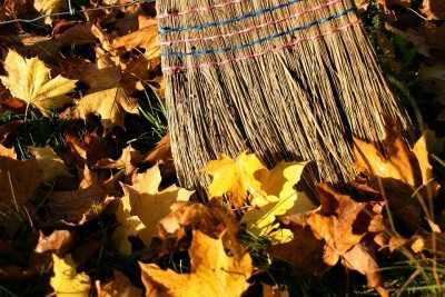 Подмосковные эксперты ОНФ разработали памятку по безопасной для природы уборке листвы в парках и скверах